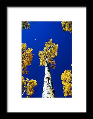 Falling Leaf Framed Prints