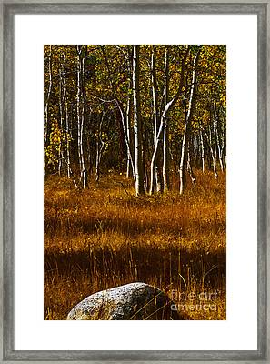 Falling Rock Framed Print by Mitch Shindelbower