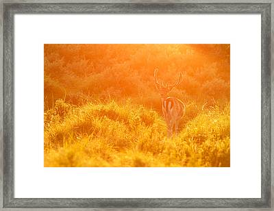 Fallow Deer At Sunset Framed Print by Roeselien Raimond