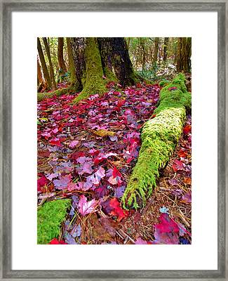 Fall's Carpet Framed Print