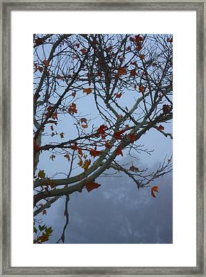Framed Print featuring the photograph Fall's Final Colors by Richard Stephen