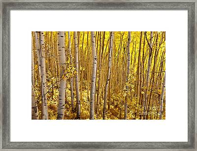 Framed Print featuring the photograph Fall's Golden Light by Steven Reed