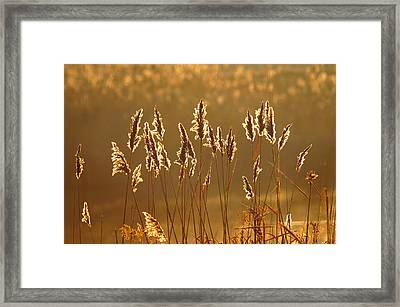 Fall's Last Stand Framed Print