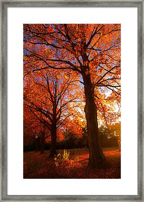 Fall's Splendor Framed Print
