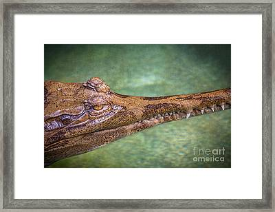 False Gharial Framed Print by Jamie Pham