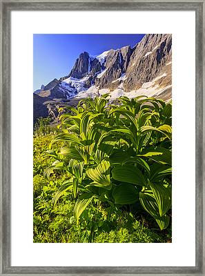 False Hellebore At The Base Of The Framed Print by Ron Watts