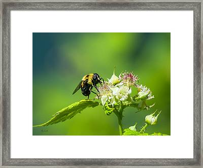 Fame Is A Bee Framed Print by Bob Orsillo