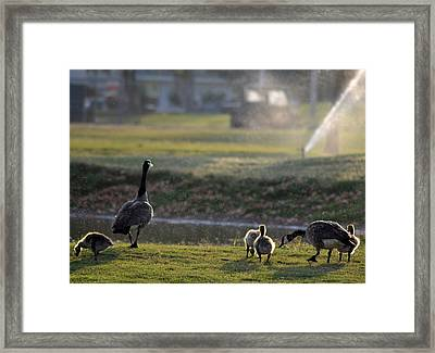 Family Affair Framed Print by Camille Lopez