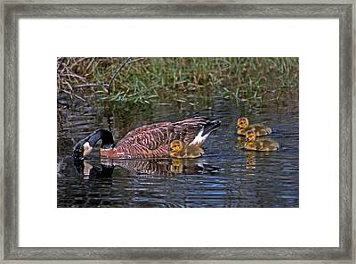 Family Affair Framed Print by Skip Willits