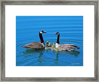 Family Canada Geese Framed Print by Jonathan Whichard
