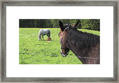 Framed Print featuring the photograph Family by Colleen Williams