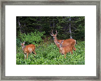 Family Dinner Framed Print by Mike Dawson