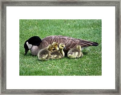Family Gathering Framed Print