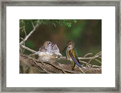 Family Love Framed Print