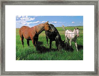 Family Meal Framed Print by Terry Reynoldson