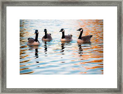Family Of Geese Framed Print by Shelby  Young