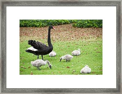 Framed Print featuring the photograph Family Of Six by Yew Kwang