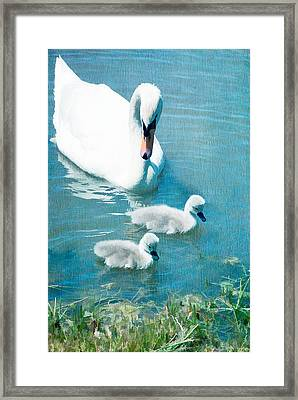 Family Of Swans At The Market Common Framed Print