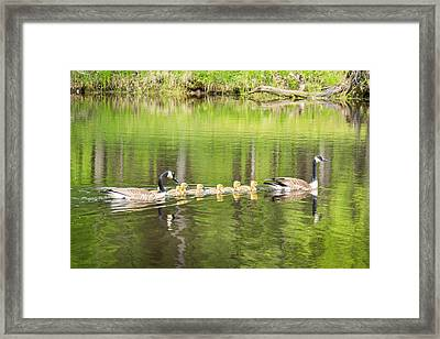 Family Outing Framed Print by Bill Pevlor