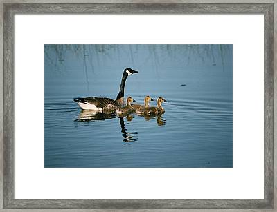 Family Outing Framed Print by David Porteus