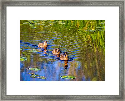 Family Outing On The Lake Framed Print