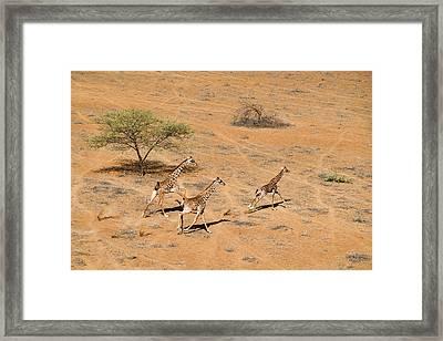 Family Paradise Framed Print