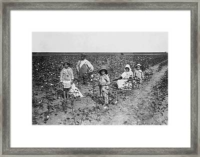 Family Picking Cotton Framed Print by Underwood Archives