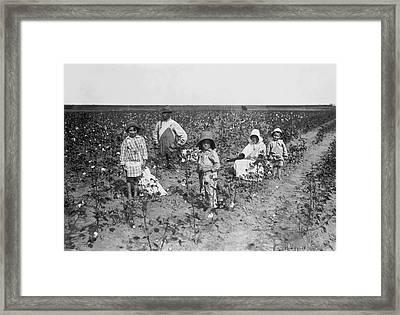Family Picking Cotton Framed Print