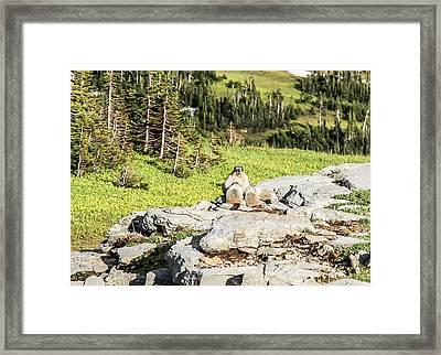 Family Picnic Framed Print