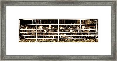 Family Portrait Behind Bars Framed Print by Olivier Le Queinec