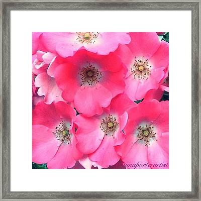 Trellis Pinks Framed Print