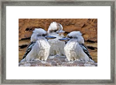 Family Ties - Kookaburra Style Framed Print