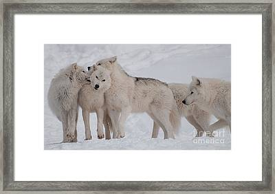 Family Ties Framed Print