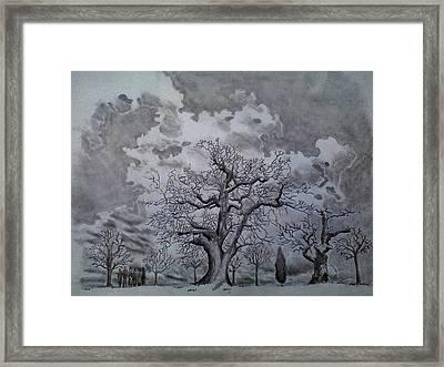 Family Tree Framed Print by Mark Greenhalgh