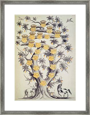 Family Tree Of Javanese Dynasty Framed Print by British Library