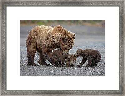 Family Tug Of War Framed Print