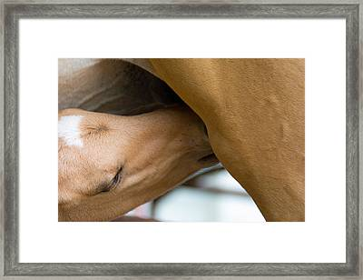 Famished Little Pony Framed Print
