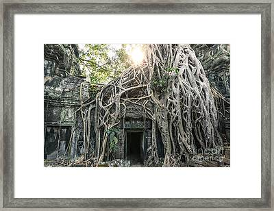 Famous Old Temple Ruin With Giant Tree Roots - Angkor Wat - Cambodia Framed Print