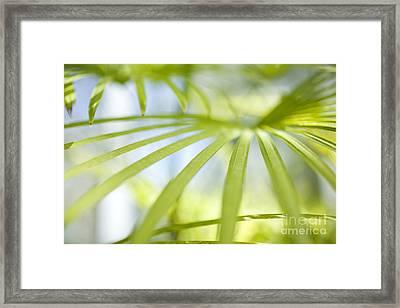 Fan Palm Fronds Framed Print by Charmian Vistaunet