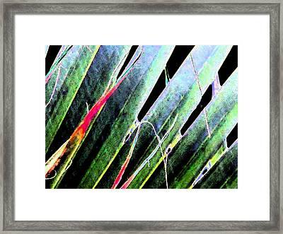 Fan Palm On Wet Day Framed Print
