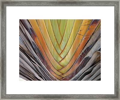 Fan Palm Trunk Framed Print