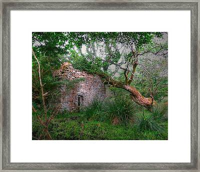 Fanciful Forest Framed Print