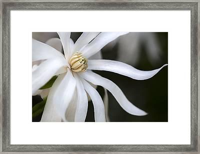 Fancy Azalea Framed Print