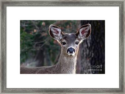 Fancy Earmuffs Framed Print