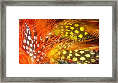 Fancy Feathers Framed Print by Catherine Ratliff