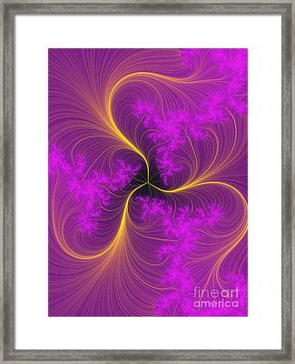 Fancy Feathers Framed Print