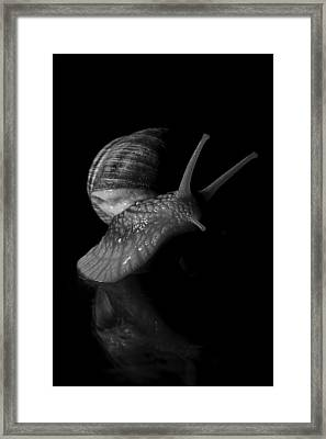 Fancy Move Framed Print by Marius Ioan Groza
