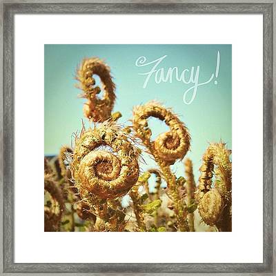 Curly Fern Fronds Framed Print by Blenda Studio