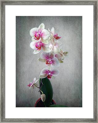Framed Print featuring the photograph Fancy Orchids by Louise Kumpf