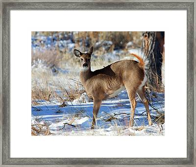 Framed Print featuring the photograph Fancy Pants by Jim Garrison